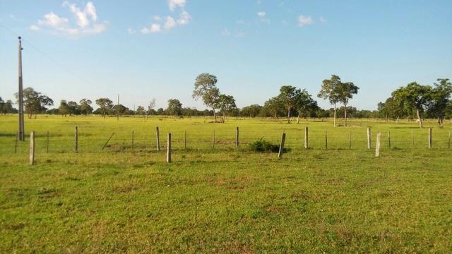 Fazenda 1.210 Hectares Excelente Pecuária - Cáceres - MT - Foto 2