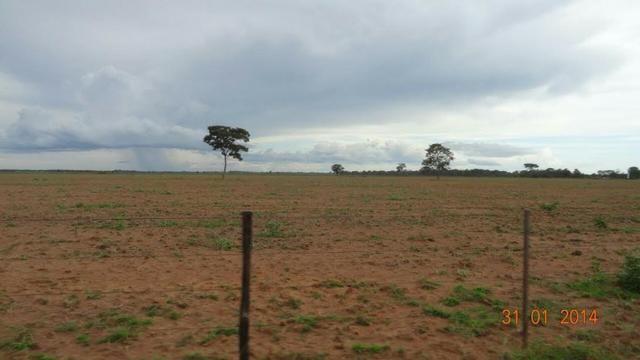 Fazenda c/ 4.500he, C/ 80% aberto, parte faz lavoura, Nova Xavantina-MT - Foto 10