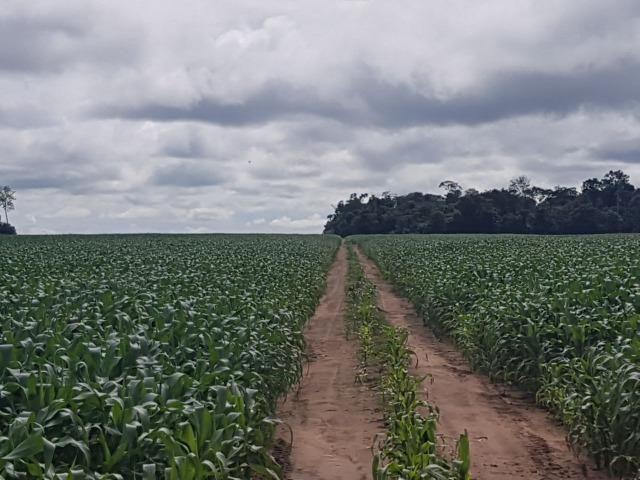 Fazenda 6.400 Hectares Plantando Lavoura - MT - Foto 4