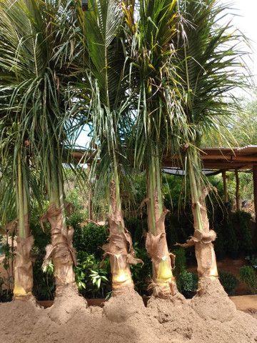 Plantas ornamentais - Foto 6