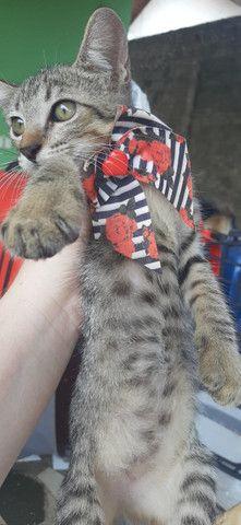 Adoção de gato filhote - Foto 2