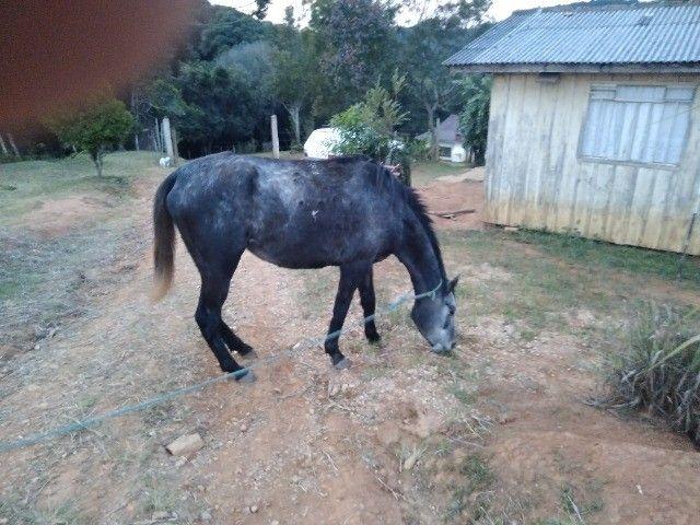 Cavalo... égua - Foto 3