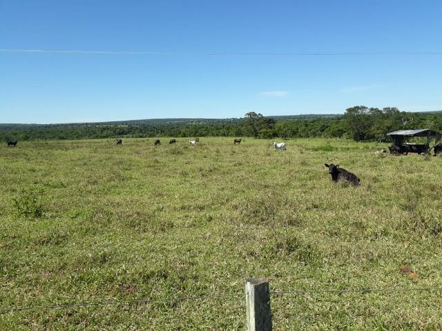Fazenda c/ 620he, plantando em 200he, 240he em pastagens, Itiquira-MT - Foto 7