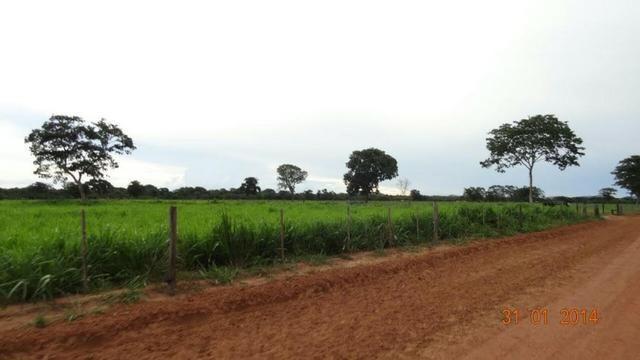 Fazenda c/ 4.500he, C/ 80% aberto, parte faz lavoura, Nova Xavantina-MT - Foto 8