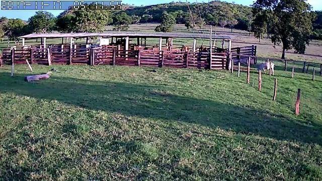 Fazenda com 686he, c/ 350He formado, terra boa, 30km antes Guiratinga-MT - Foto 13