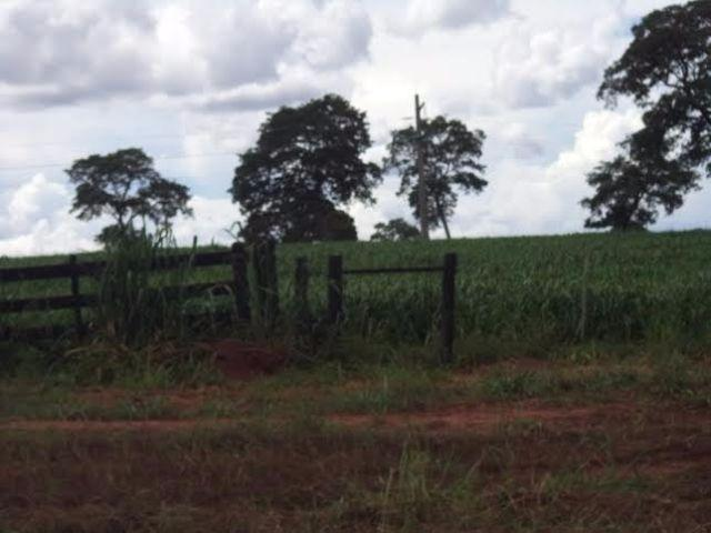 Fazenda c/ 3.480he c/ 80% formada, as margens da BR, Rondonópolis-MT - Foto 6