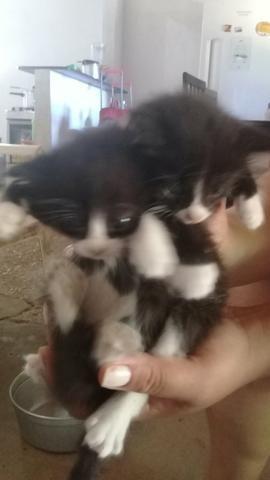Doação de lindos gatinhos mestiços - Foto 6