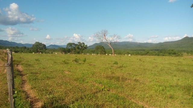 Fazenda 1.210 Hectares Excelente Pecuária - Cáceres - MT - Foto 9