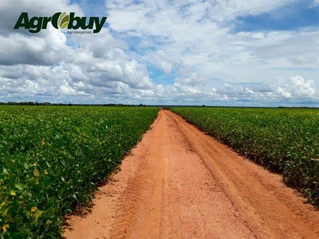 Fazenda Localizada em Alvorada - to - Foto 4