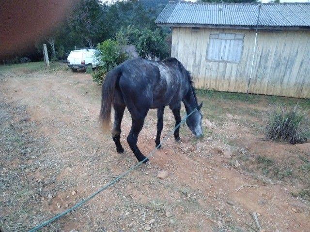 Cavalo... égua - Foto 5