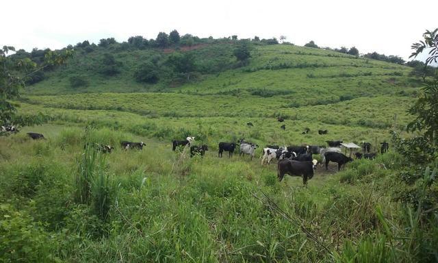 36 hectares na região pingo dagua