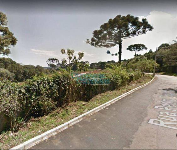 Terreno à venda, 3693 m² por r$ 1.124.222 - augusta - curitiba/pr - Foto 11