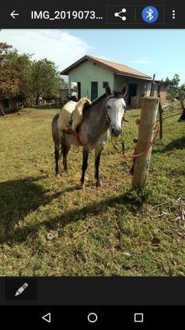 Vendo cavalo inteiro