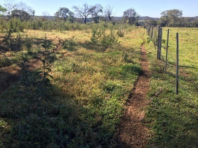 Fazenda c/ 570he, c/ 90% aberto/juquirado, 8km de Itiquira-MT, entrada + 4 parcelas - Foto 2