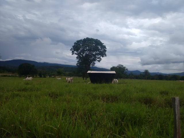 Fazenda 570 Hectares Grande Oportunidade - MT - Foto 9
