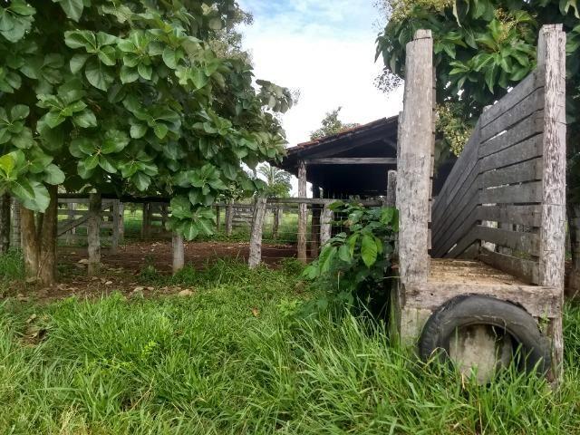 Fazenda com 200he, c/ 50% formado, terra de cultura, 40km de Cuiabá-MT - Foto 4