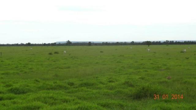 Fazenda c/ 4.500he, C/ 80% aberto, parte faz lavoura, Nova Xavantina-MT - Foto 9