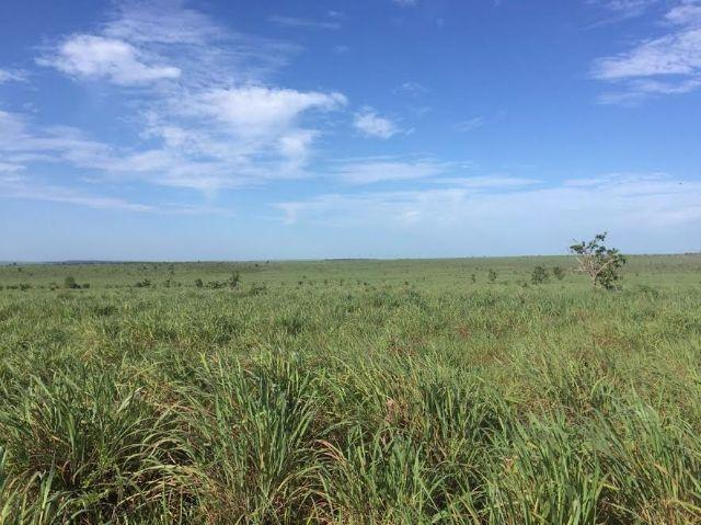 Fazenda c/ 1.700he c/ 80% formados, dupla aptidão, Itiquira-MT, pego 50% em imóvel no PR - Foto 2