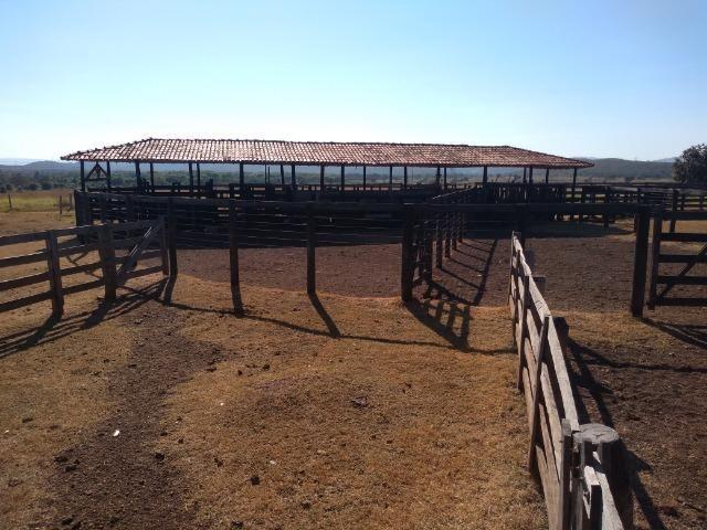 Fazenda c/ 920he, com 600he formados, as margens da BR, a 35km de Cuiabá-MT - Foto 11