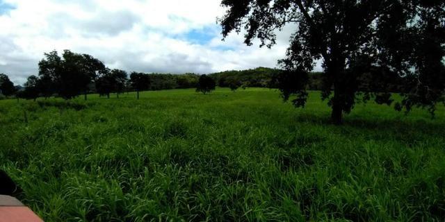 Fazenda com 686he, c/ 350He formado, terra boa, 30km antes Guiratinga-MT - Foto 5