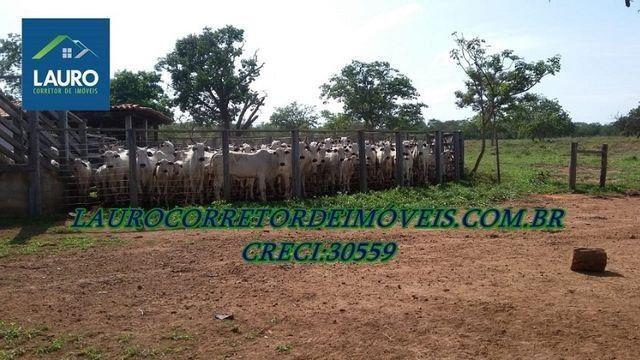 Fazenda Coração de Jesus com 1.000 hectares - Foto 4