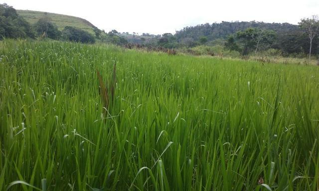 36 hectares na região pingo dagua - Foto 7