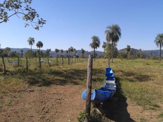 Fazenda com 1.000he c/ 80% formado, 50km de Cuiabá - Foto 8