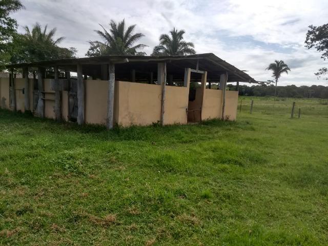 Fazenda com 200he, c/ 50% formado, terra de cultura, 40km de Cuiabá-MT - Foto 11