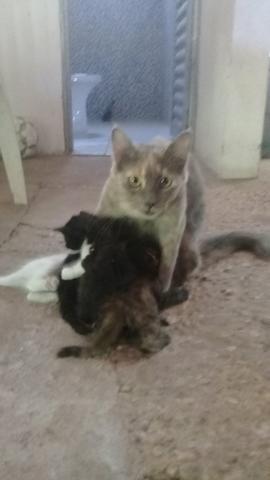 Doação de lindos gatinhos mestiços - Foto 3
