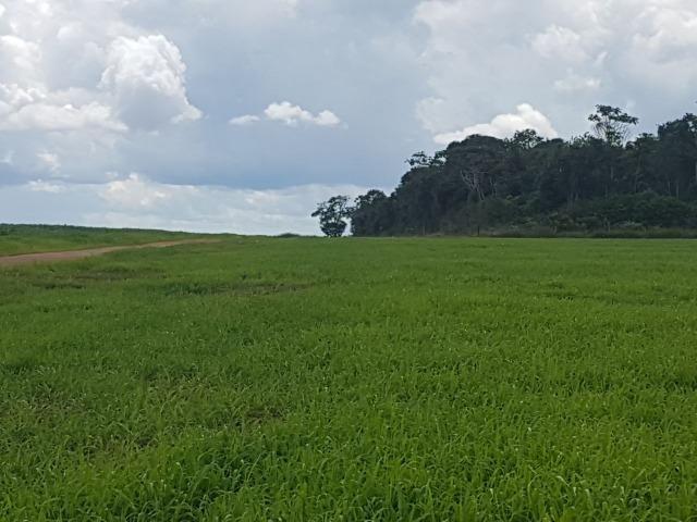 Fazenda 6.400 Hectares Plantando Lavoura - MT - Foto 3