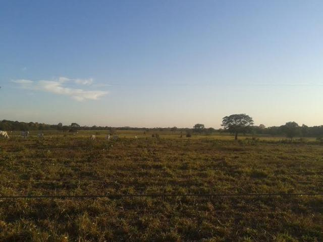 Fazenda c/ 500he c/ 315he formado, a 50km de Cuiabá-MT - Foto 5