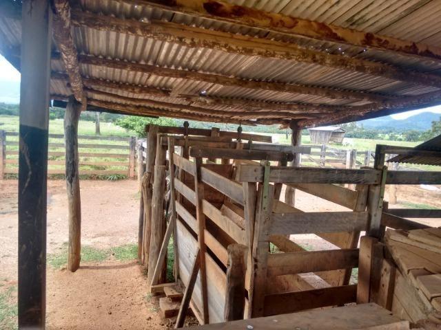 Fazenda 570 Hectares Grande Oportunidade - MT - Foto 12