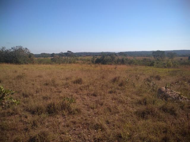 Fazenda c/ 920he, com 600he formados, as margens da BR, a 35km de Cuiabá-MT - Foto 7