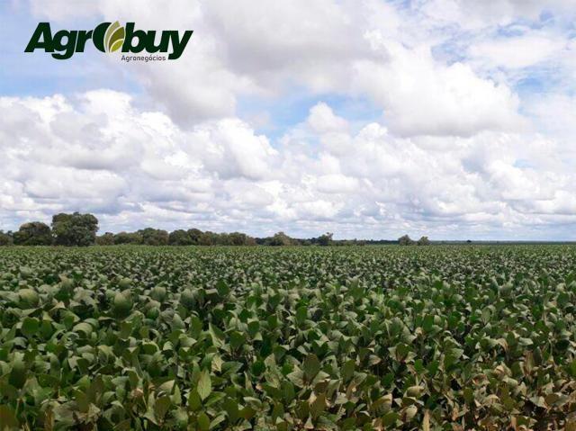Fazenda Localizada em Alvorada - to - Foto 3