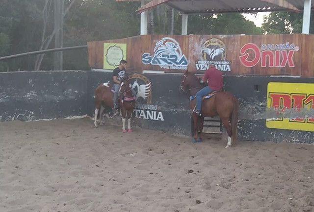 Vendo Égua Paint Horse - Foto 4