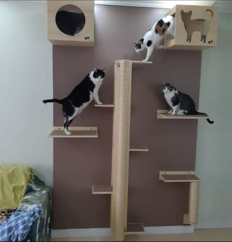 Circuito para gatos  - Foto 6