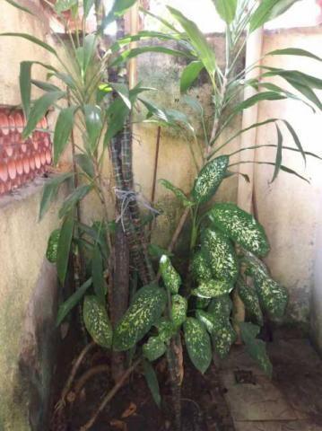 Apartamento à venda com 1 dormitórios em Del castilho, Rio de janeiro cod:PPAP10035 - Foto 2