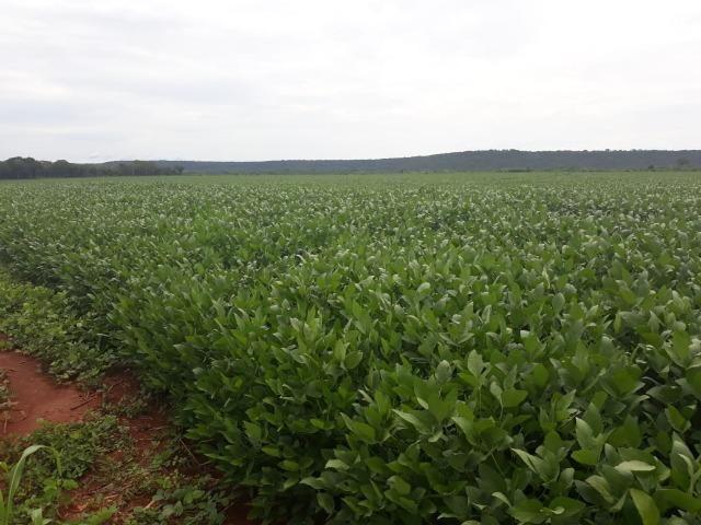 Fazenda 1.020 Hectares Plantando Lavoura - MT