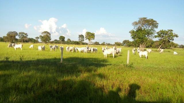 Fazenda 1.210 Hectares Excelente Pecuária - Cáceres - MT