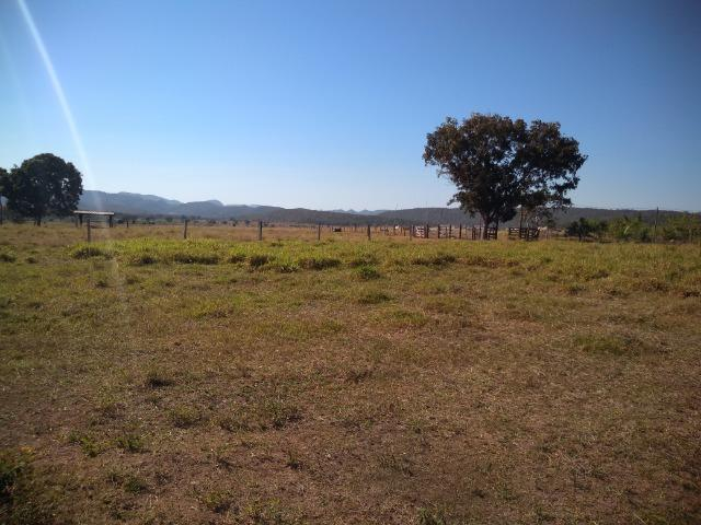 Fazenda c/ 920he, com 600he formados, as margens da BR, a 35km de Cuiabá-MT - Foto 12