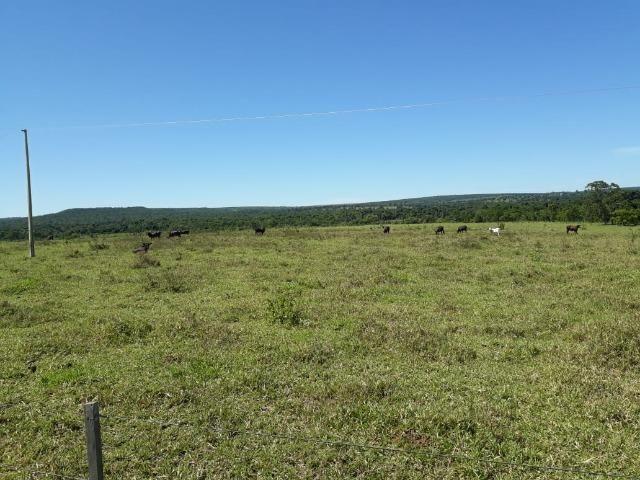 Fazenda c/ 620he, plantando em 200he, 240he em pastagens, Itiquira-MT - Foto 5
