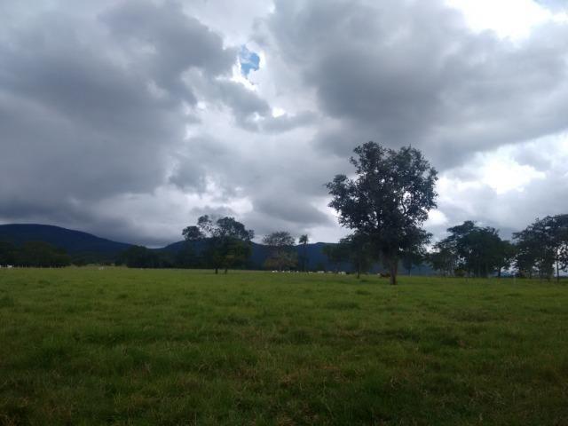 Fazenda 570 Hectares Grande Oportunidade - MT - Foto 6