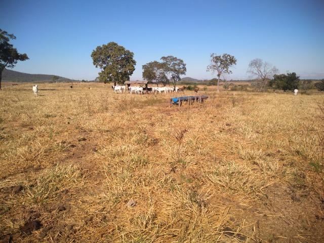 Fazenda c/ 920he, com 600he formados, as margens da BR, a 35km de Cuiabá-MT - Foto 14