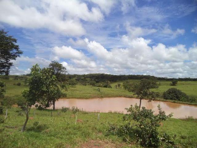 Fazenda c/ 3.480he c/ 80% formada, as margens da BR, Rondonópolis-MT - Foto 5