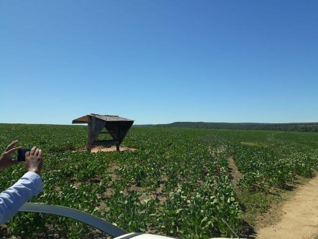 Fazenda c/ 620he, plantando em 200he, 240he em pastagens, Itiquira-MT - Foto 9