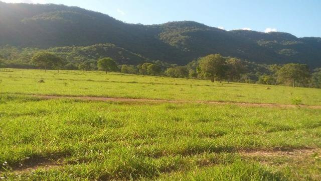 Fazenda 1.210 Hectares Excelente Pecuária - Cáceres - MT - Foto 8