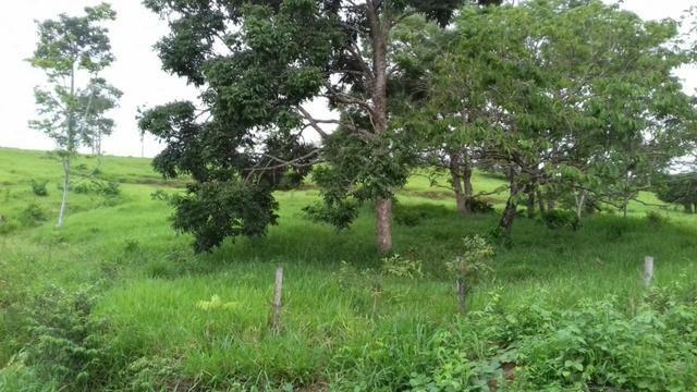 Fazenda em Porto Acre- AC - Foto 6