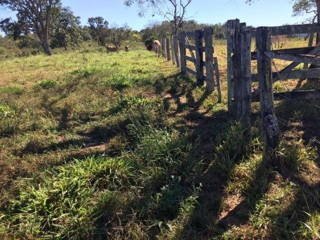 Fazenda c/ 570he, c/ 90% aberto/juquirado, 8km de Itiquira-MT, entrada + 4 parcelas - Foto 9