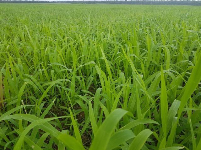 Fazenda 6.400 Hectares Plantando Lavoura - MT - Foto 7