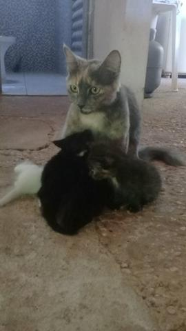 Doação de lindos gatinhos mestiços